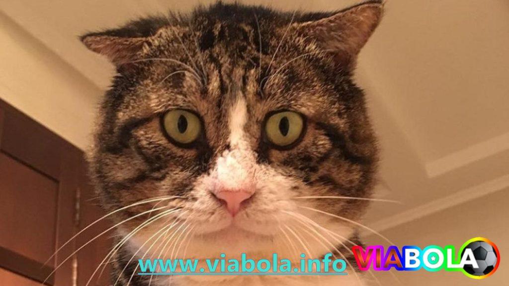 Aksi Pria Bicara dengan Kucing Bikin Ngakak Kocak